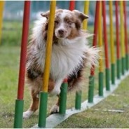 Agility Assessment